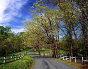 Road in Albemarle County. *Courtesy of Charlottesville Albemarle Convention & Visitors Bureau