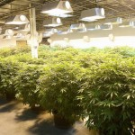 Energy Efficiency Incentives for Marijuana Growers