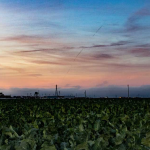 Policy & Regulatory Shifts Opening Door for Agriculture Microgrids, More in California