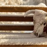 Why We Can't Just Shrug Off Texas' Extreme Winter
